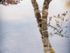 Twin Birch Trees